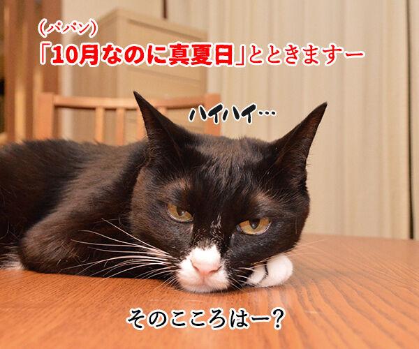 今日から4年目突入デースッ 猫の写真で4コマ漫画 3コマ目ッ