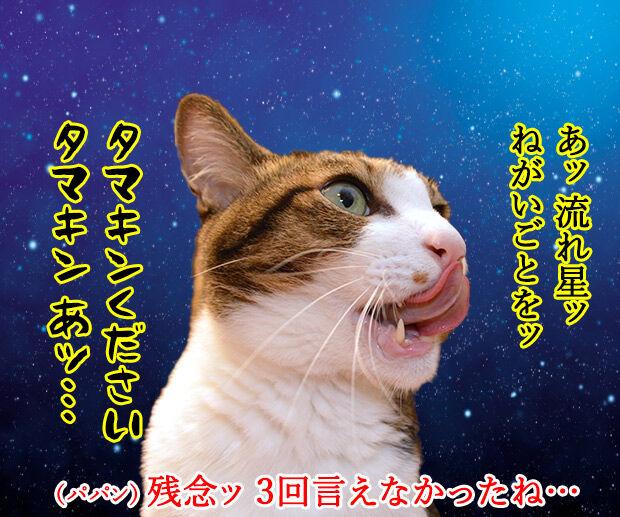 流れ星にお願いをしてみたのッ 猫の写真で4コマ漫画 2コマ目ッ