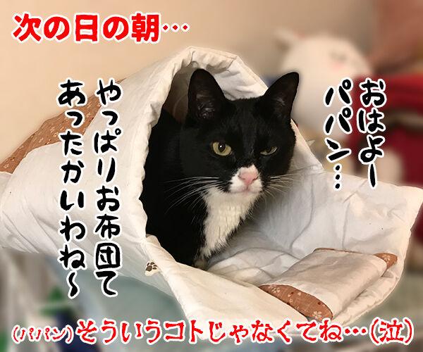 寒い夜はパパンのお布団で寝ませんこと? 猫の写真で4コマ漫画 4コマ目ッ