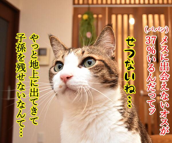 夏だから「セミ」の話 猫の写真で4コマ漫画 2コマ目ッ