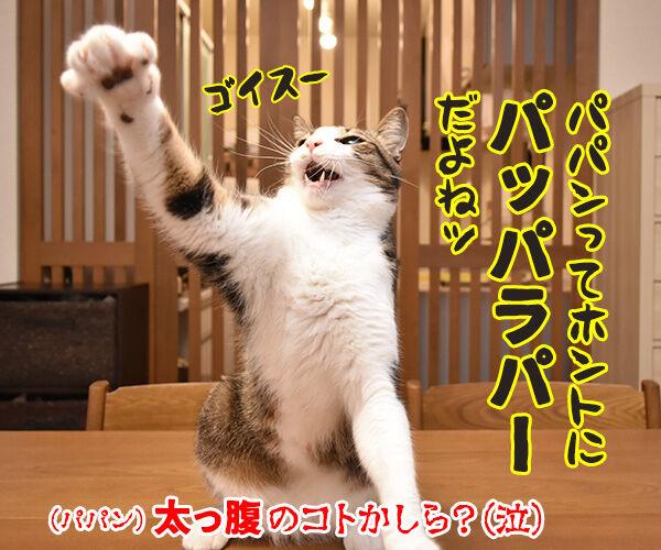 今年もあずだい年賀状を送っちゃうわよーッ 猫の写真で4コマ漫画 4コマ目ッ
