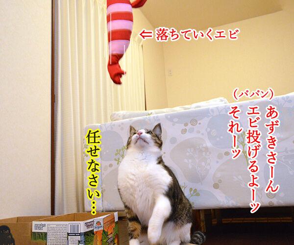 エビキャッチ 其の一 猫の写真で4コマ漫画 1コマ目ッ