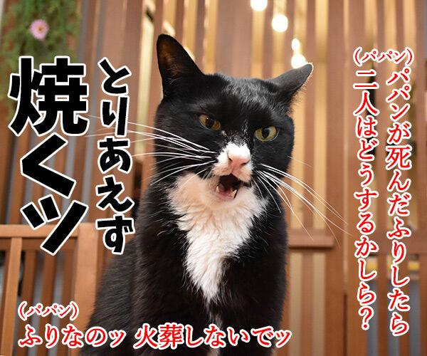 猫さんの前で死んだふりをしたら? 猫の写真で4コマ漫画 2コマ目ッ