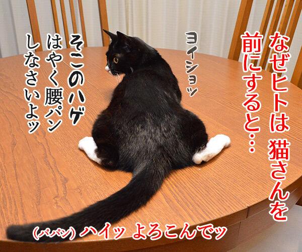 下僕な理由がわかったの 猫の写真で4コマ漫画 1コマ目ッ