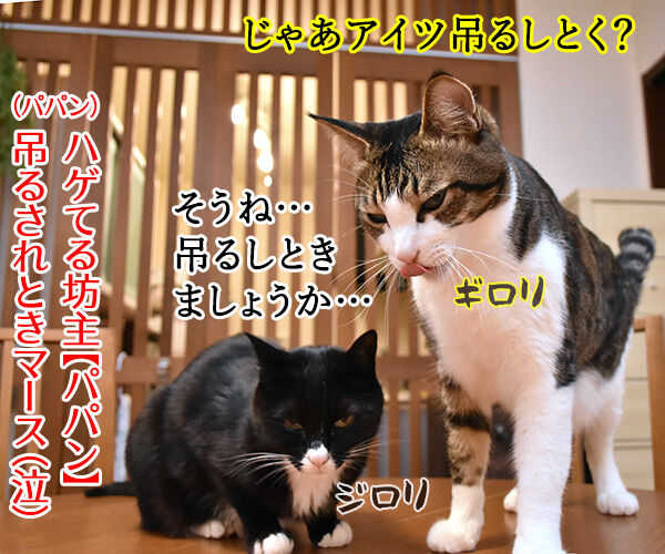 今週末はららぽーと豊洲のドッグイベントに行こうッ 猫の写真で4コマ漫画 4コマ目ッ