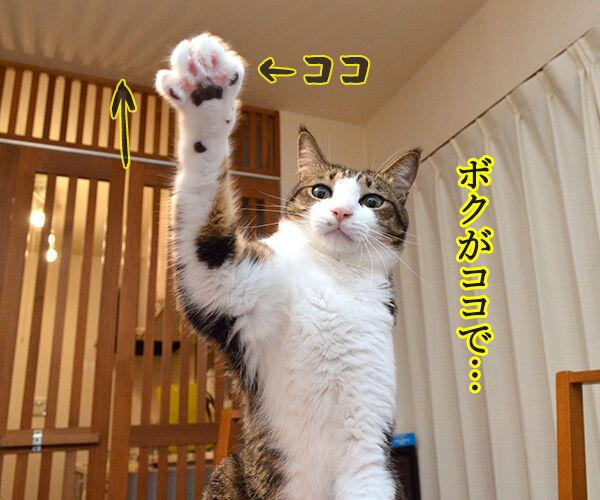 ボクがココで、パパンがココ 猫の写真で4コマ漫画 1コマ目ッ