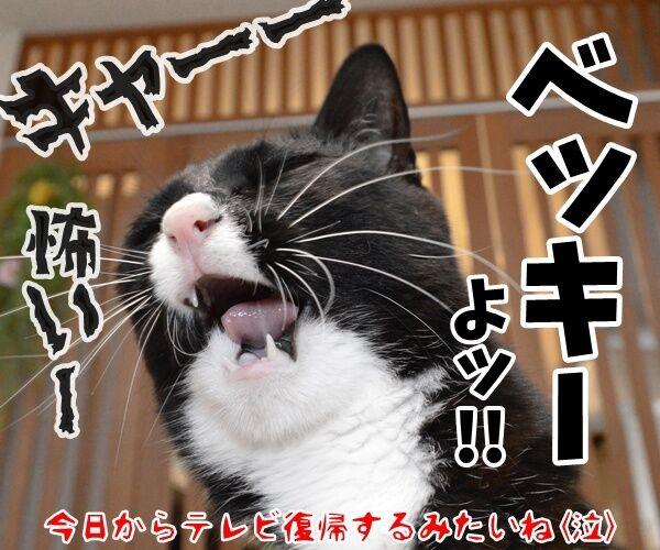 13日の金曜日に現れるのは? 猫の写真で4コマ漫画 4コマ目ッ