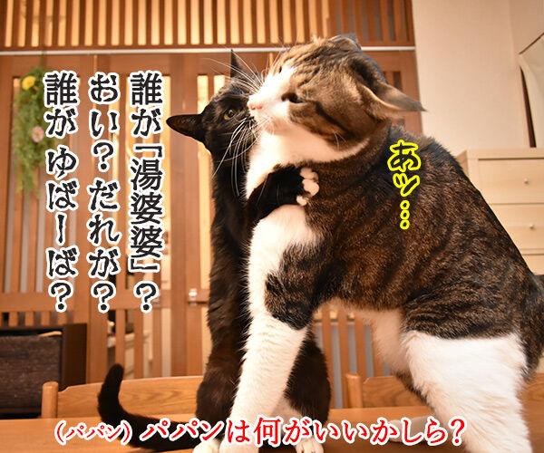 『千と千尋の神隠し』ごっこするよーッ 猫の写真で4コマ漫画 3コマ目ッ