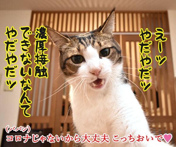 飼主から猫さんにコロナが感染しちゃったのよッ 猫の写真で4コマ漫画 3コマ目ッ