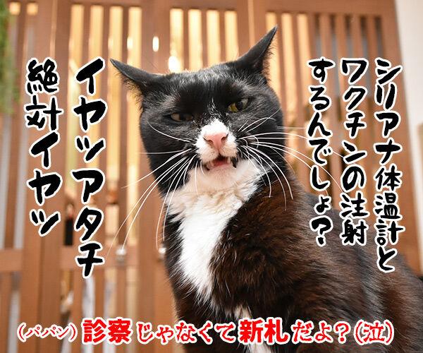 次はボクの新札だね… 猫の写真で4コマ漫画 4コマ目ッ
