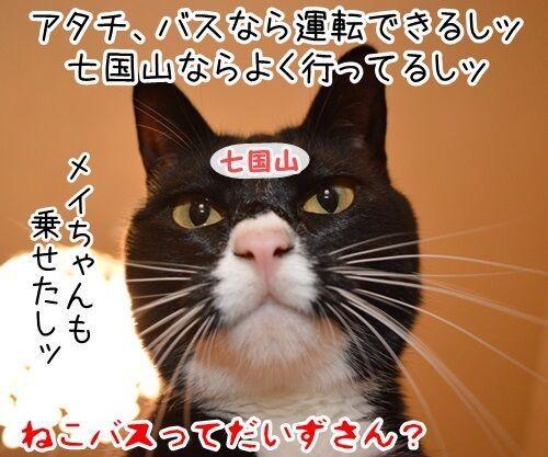 タクシー運転手のハナシ 猫の写真で4コマ漫画 4コマ目ッ