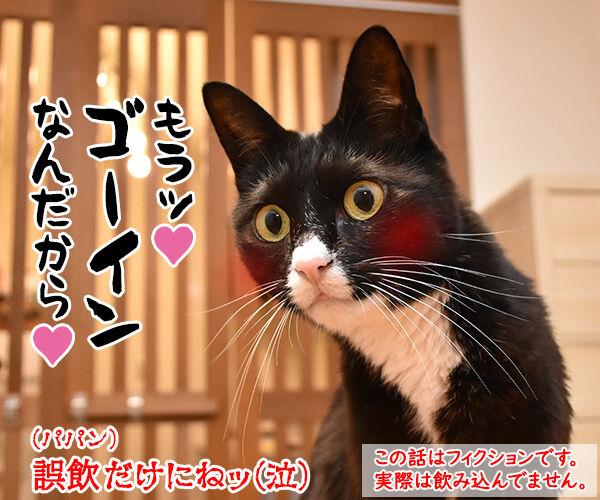 小さいねずみのおもちゃはキケンなのよッ 猫の写真で4コマ漫画 4コマ目ッ