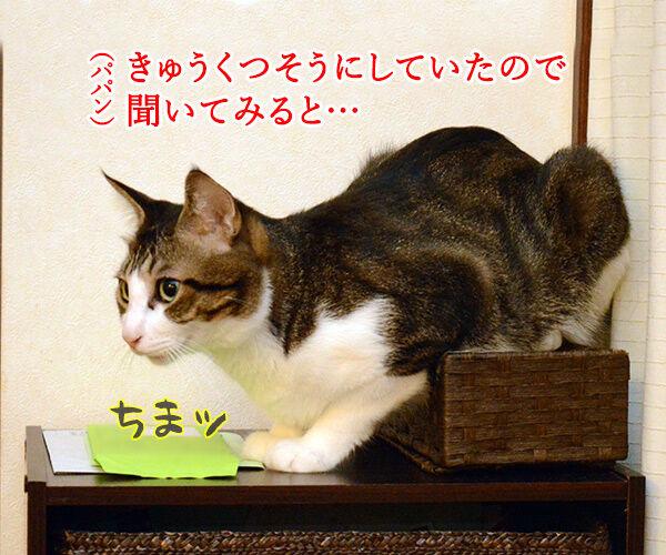 だいずさんだもの 猫の写真で4コマ漫画 2コマ目ッ