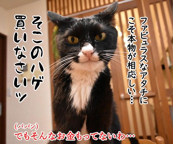 ネコ用ベッドが欲しいのよッ 猫の写真で4コマ漫画 3コマ目ッ