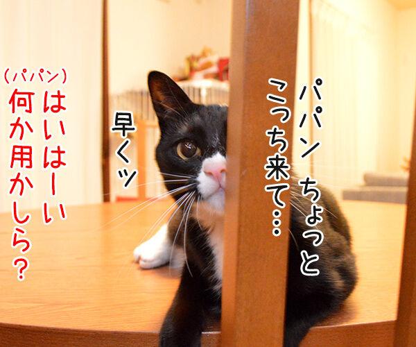 ちょっと来てッ 猫の写真で4コマ漫画 1コマ目ッ
