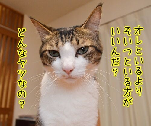 この後… どうする…? 猫の写真で4コマ漫画 3コマ目ッ