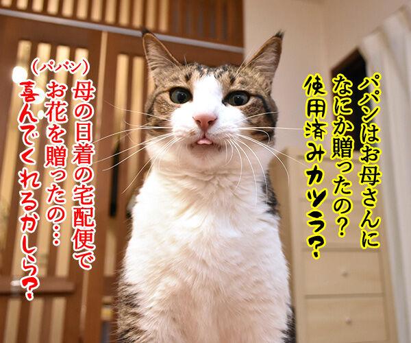 母の日のプレゼントはクロネコヤマトで 猫の写真で4コマ漫画 2コマ目ッ