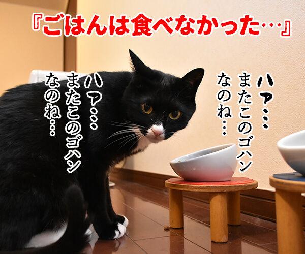 流行語大賞 ノミネート語 『ご飯論法』 猫の写真で4コマ漫画 3コマ目ッ