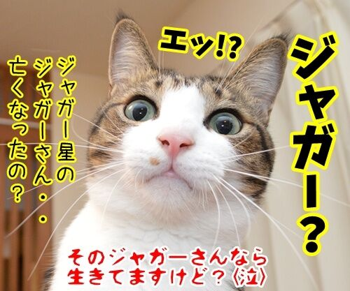 あのチャゲが…… 猫の写真で4コマ漫画 4コマ目ッ