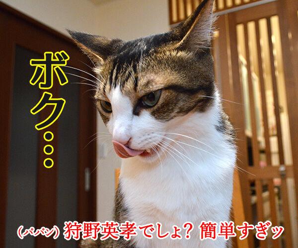 ダレのモノマネでしょうかッ? 猫の写真で4コマ漫画 3コマ目ッ