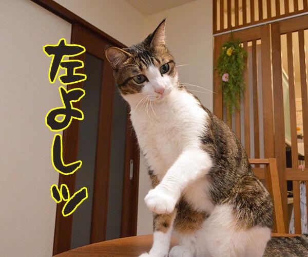 道路を渡るときはちゃんと左右を確認するのよッ 猫の写真で4コマ漫画 3コマ目ッ