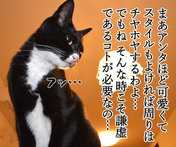 お説教 猫の写真で4コマ漫画 2コマ目ッ