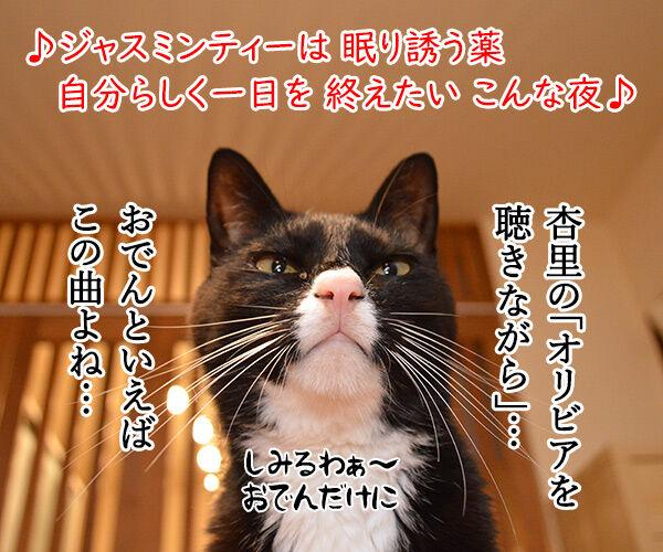 おでんのBGMといえばこの曲よねッ 猫の写真で4コマ漫画 2コマ目ッ