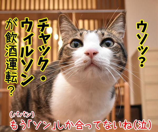 ガリガリガリクソンが飲酒運転で逮捕されたんですってッ 猫の写真で4コマ漫画 4コマ目ッ