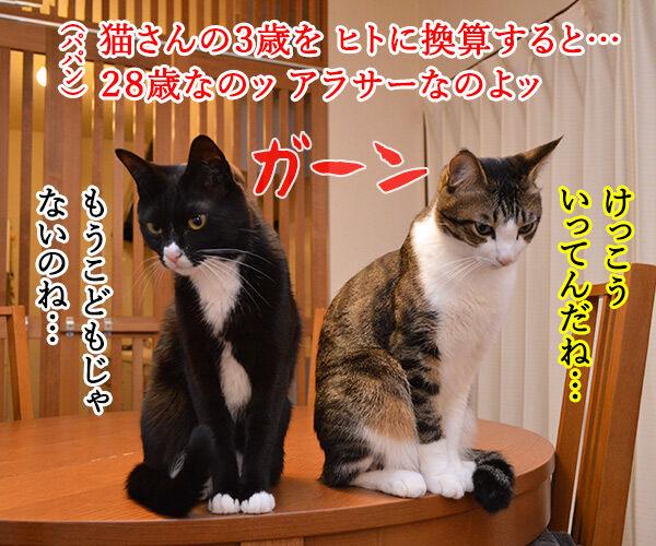 こどもの日 猫の写真で4コマ漫画 4コマ目ッ