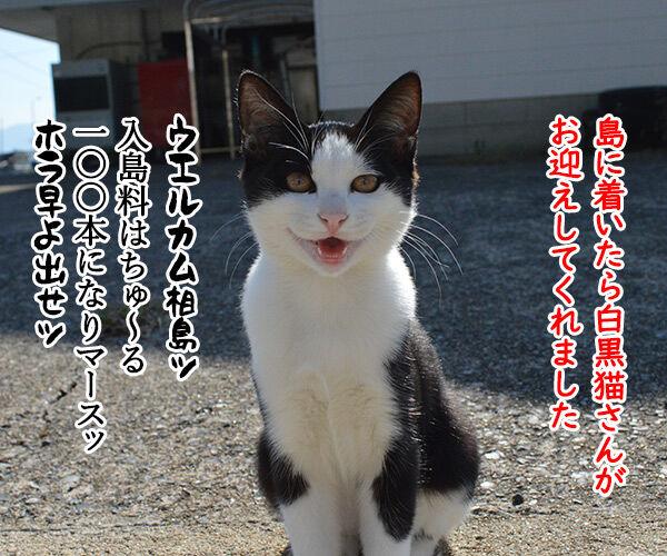 猫島 その一 猫の写真で4コマ漫画 1コマ目ッ