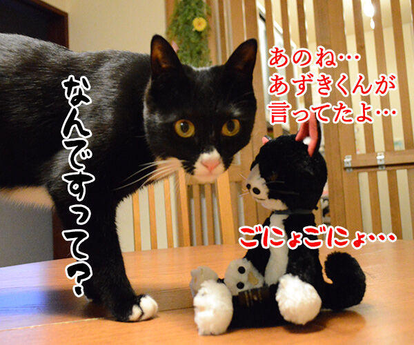 あのね… 猫の写真で4コマ漫画 2コマ目ッ