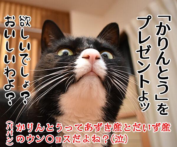 パパンの似顔絵を募集するのよッ 猫の写真で4コマ漫画 4コマ目ッ