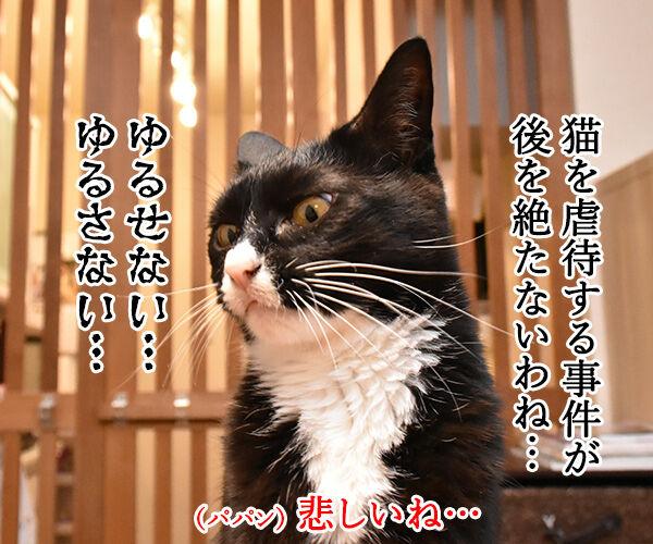 虐待は許さないッ 猫の写真で4コマ漫画 1コマ目ッ