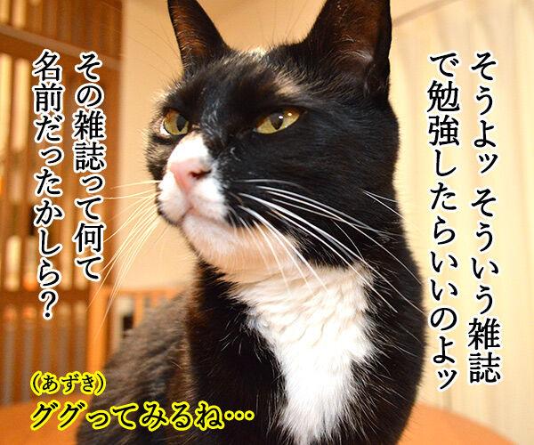 きもちがわかるやつ 猫の写真で4コマ漫画 3コマ目ッ