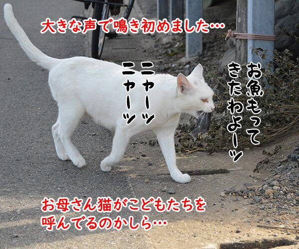 猫島 其の三 猫の写真で4コマ漫画 3コマ目ッ