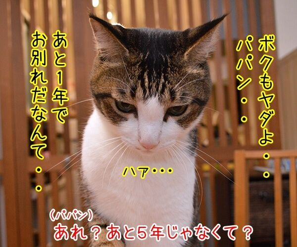 ネコの平均寿命が延びてるんですってッ 猫の写真で4コマ漫画 3コマ目ッ