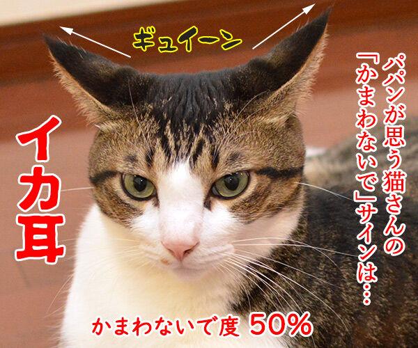 パパンが思う猫さんの「かまわないで」サイン 猫の写真で4コマ漫画 1コマ目ッ