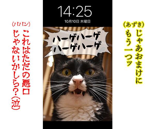 猫に叱られたい人のためのロック画面なのッ 猫の写真で4コマ漫画 4コマ目ッ