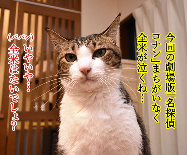 劇場版『名探偵コナン』は全米が泣くね… 猫の写真で4コマ漫画 1コマ目ッ