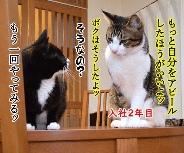新人あいさつ 猫の写真で4コマ漫画 3コマ目ッ