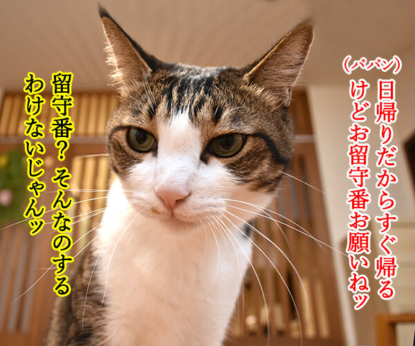 お盆だから実家に帰ろうと思うの 猫の写真で4コマ漫画 2コマ目ッ