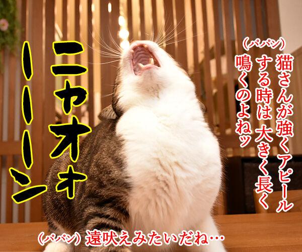 猫さんがアピールするときの鳴き方は? 猫の写真で4コマ漫画 1コマ目ッ