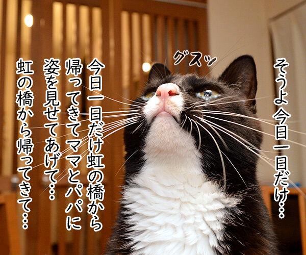 虹の橋から帰ってきてね 猫の写真で4コマ漫画 3コマ目ッ