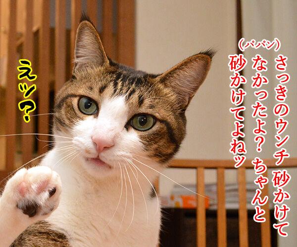 ちゃんと砂かけてよね 猫の写真で4コマ漫画 2コマ目ッ