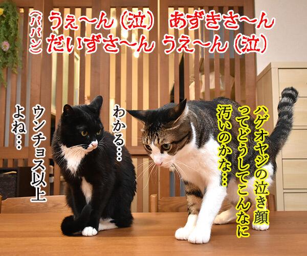 花王「ニャンとも清潔トイレ」のWEB動画が広告賞を受賞したんですってッ 猫の写真で4コマ漫画 4コマ目ッ