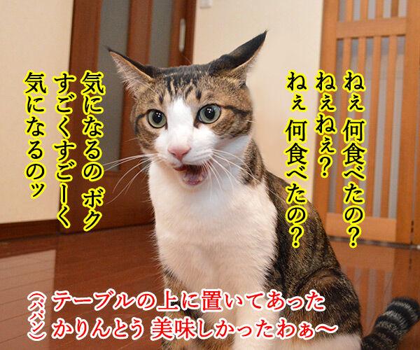 パパンのこっそりオヤツ 猫の写真で4コマ漫画 3コマ目ッ