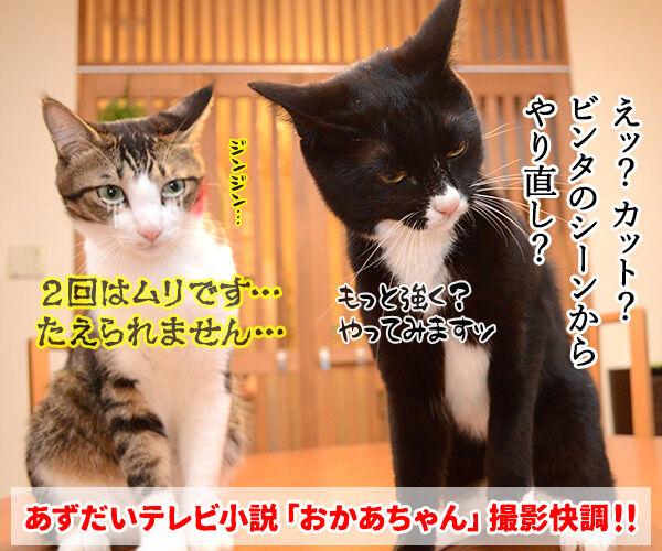 あずだいテレビ小説『おかあちゃん』 猫の写真で4コマ漫画 4コマ目ッ
