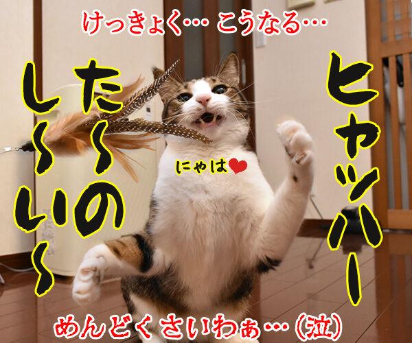 けっきょく… こうなる… 猫の写真で4コマ漫画 4コマ目ッ