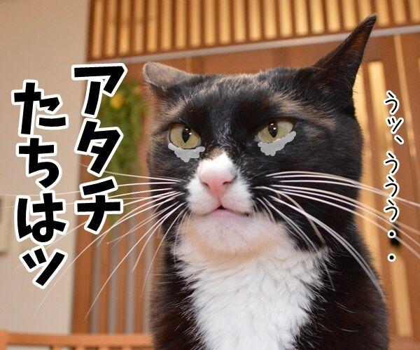 門出の言葉「僕たち、わたしたちは……」 猫の写真で4コマ漫画 3コマ目ッ