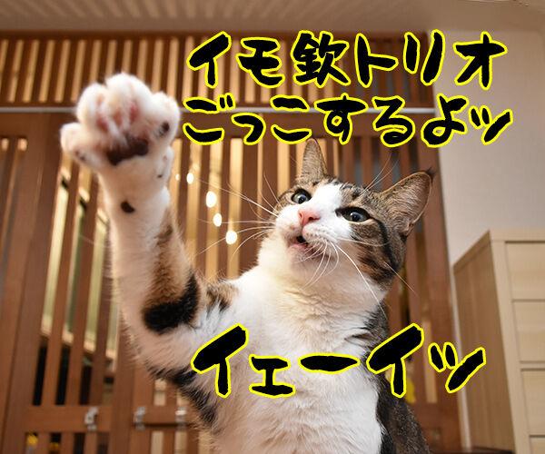 イモ欽トリオごっこするよーッ 猫の写真で4コマ漫画 1コマ目ッ